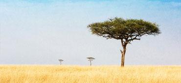Kenia - w pogoni za Wielką Piątką
